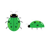 Green ladybug vector color illustration Royalty Free Stock Photography