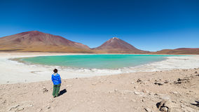 Green Lagoon and Licancabur Volcano on the Bolivian Andes Royalty Free Stock Photography