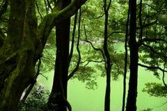 Green lake Stock Photography
