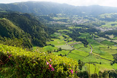 Green lake of furnas Sao Miguel, The Azores Islands, Portugal. Green lake in Furnas from the island of Azores in Portugal stock image