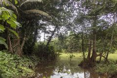 Green lake in the middle of Bolivian rainforest, Madidi national park in the Amazon river basin in Bolivia. Responsible ecotourism in Bolivian jungles royalty free stock image