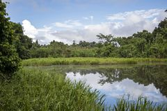 Green lake in the middle of Bolivian rainforest, Madidi national park in the Amazon river basin in Bolivia. Responsible ecotourism in Bolivian jungles royalty free stock photos