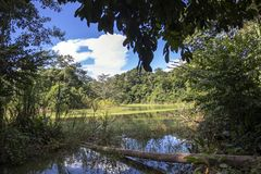Green lake in the middle of Bolivian rainforest, Madidi national park in the Amazon river basin in Bolivia. Responsible ecotourism in Bolivian jungles royalty free stock photo