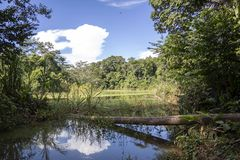 Green lake in the middle of Bolivian rainforest, Madidi national park in the Amazon river basin in Bolivia. Responsible ecotourism in Bolivian jungles stock image
