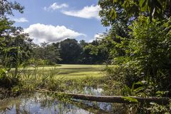 Green lake in the middle of Bolivian rainforest, Madidi national park in the Amazon river basin in Bolivia. Responsible ecotourism in Bolivian jungles stock photography