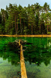 Green Lake Royalty Free Stock Photography