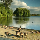 Green Lake, Seattle Royalty Free Stock Images