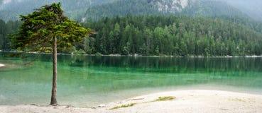 Green lake and tree alone Stock Photos