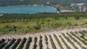 Green lake, vineyards in the mountains aerial 4k video stock video footage