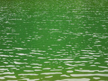 Green lake water. A lake`s green water with small ripples Stock Images