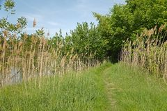 Green lakeside path Royalty Free Stock Photography