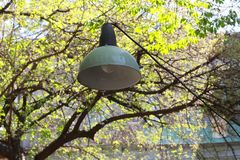 Green lamp on trees background stock photo