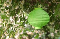 Green lampion hanging on a blooming Jasmine bush. Green lampion hanging between the branches of a blooming Jasmine bush royalty free stock images