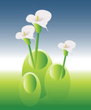 Green Land 02. Flowers in vases from natural Stock Images