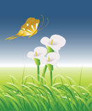 Green Land 04. Painting from natural, flowers between grass, butterfly around flowers Royalty Free Stock Image