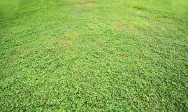 Green land Stock Photos