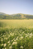 Green landscape. Mountains green field landscape with flowers and grass Stock Photo