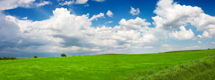 Green landscape. Spring landscape. Is a green field full of wheat plants. Is a sunny day with some white clouds in a blue sky. There was a strong wind. The wheat Stock Image