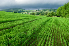 Green field with cloudy sky Stock Images