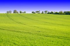 Green landscape Royalty Free Stock Photography