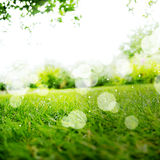 Green Landscape Background with Sunshine and Boke Royalty Free Stock Image