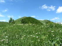 Green landscape. Green beautiful landscape on the mount beshtau Stock Images