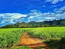 Green landscape. Beautiful panorama in Thailand. Great colors and relax Royalty Free Stock Image