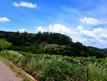 Exclusive green landscape of southern Brazil royalty free stock images