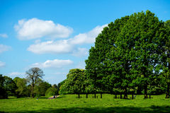 Green Landscape and Blue Sky Royalty Free Stock Photo