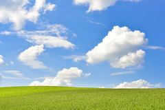 Green landscape with corn field and blue sky Stock Photos