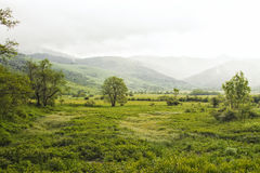 Green landscape field Royalty Free Stock Images