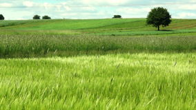 Green landscape stock footage