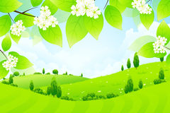 Green Landscape with Flowers Royalty Free Stock Images