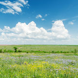 Green landscape with flowers and clouds Royalty Free Stock Images