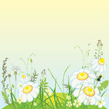 Green landscape, flowers and grass meadow Stock Photography