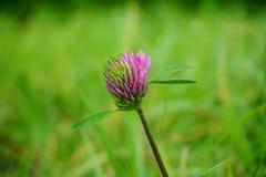 Flower minimalisme stock image