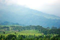 Green landscape in a foggy peak Stock Photo