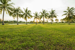 Green landscape with grassfield and coconut tree palm. Green park landscape with grassfield and coconut tree palm Royalty Free Stock Photography
