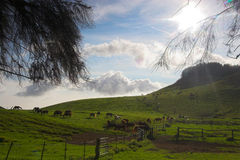 Green landscape and horses Stock Photo