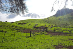 Green landscape and horses Stock Images