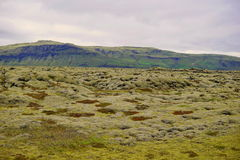 Green landscape of Icelandic nature with stones covered by moss with the mountains in the background Royalty Free Stock Images