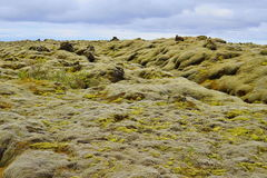 Green landscape of Icelandic nature with stones covered by moss with the mountains in the background Stock Photos