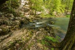 Green landscape and karst spring in national park Rakov Skocjan in Slovenia during spring time Royalty Free Stock Photography