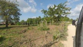 Green landscape of kenya. Tropical green landscape of kenya on a road trip stock video