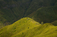 Green landscape of Madeira Stock Photo