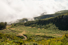 Green landscape of Madeira Stock Photography