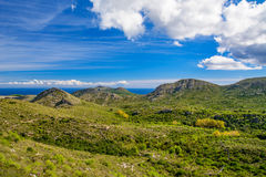 Green landscape of a Mallorca. Typical beautiful landscape of a Mallorca. Green hills with a grass and olive trees with a blue sky and the ocean in the Royalty Free Stock Images