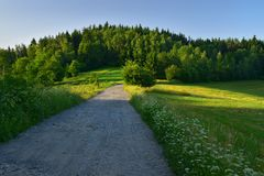 Green landscape in summer. Green landscape with meadow and forest on a hill in summer morning lit by sun royalty free stock photos