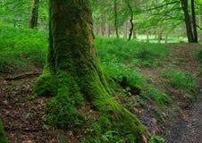 Green. Landscape in National Park Czech Switzerland, Czech republic, Europe stock photo