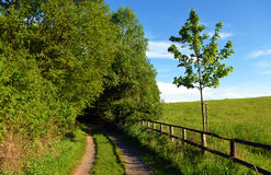 Green landscape near Kokorin castle Stock Photo